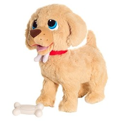 GOLDY THE DOG